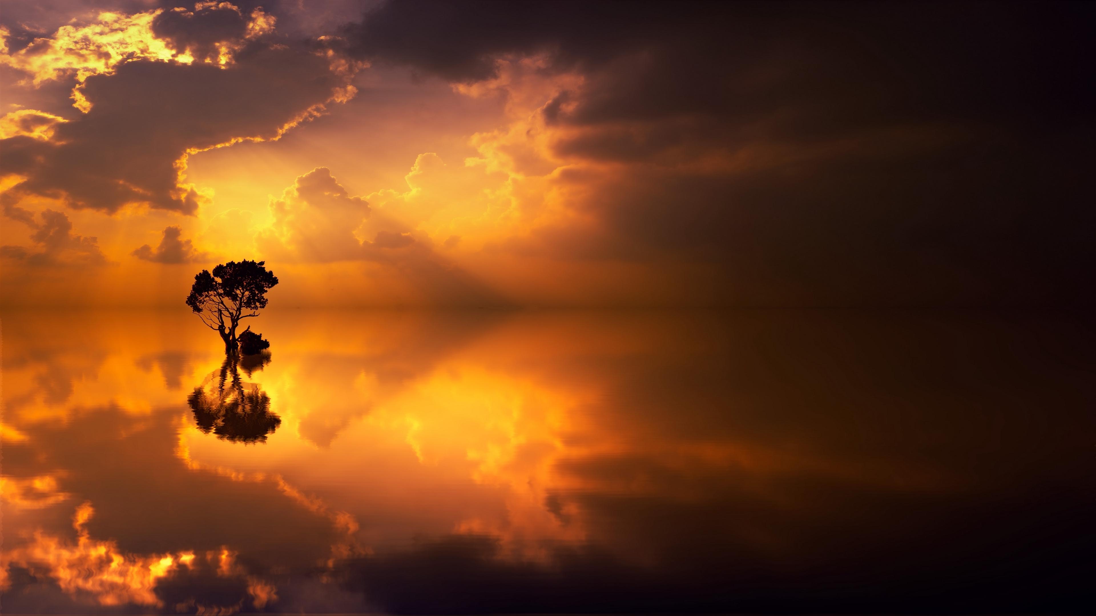 tree lonely reflection sea horizon 4k 1541117299 - tree, lonely, reflection, sea, horizon 4k - tree, reflection, Lonely