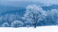tree snow winter forest 4k 1541115890 200x110 - tree, snow, winter, forest 4k - Winter, tree, Snow