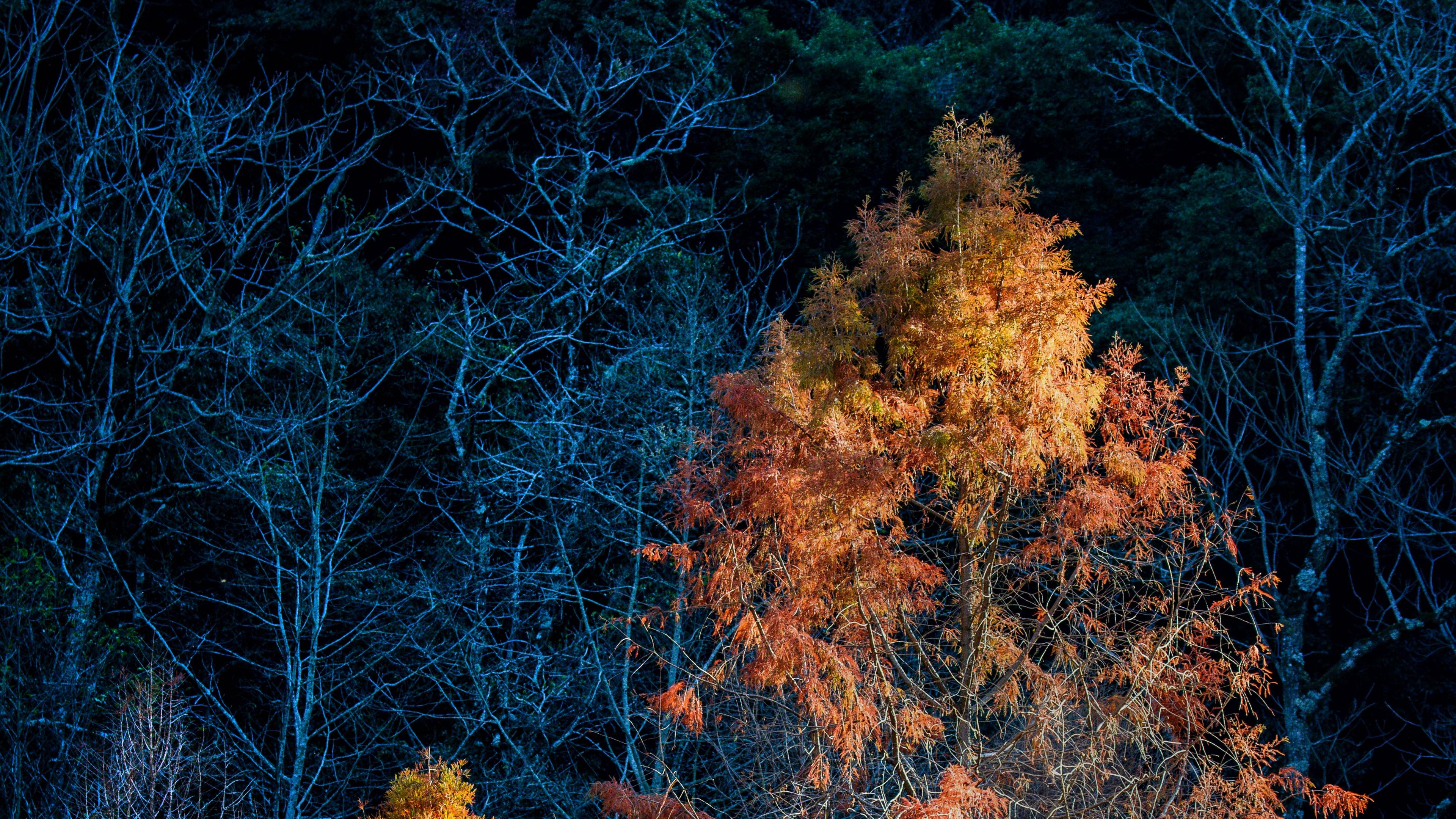 trees autumn dark branches 4k 1541116802 - trees, autumn, dark, branches 4k - Trees, Dark, Autumn