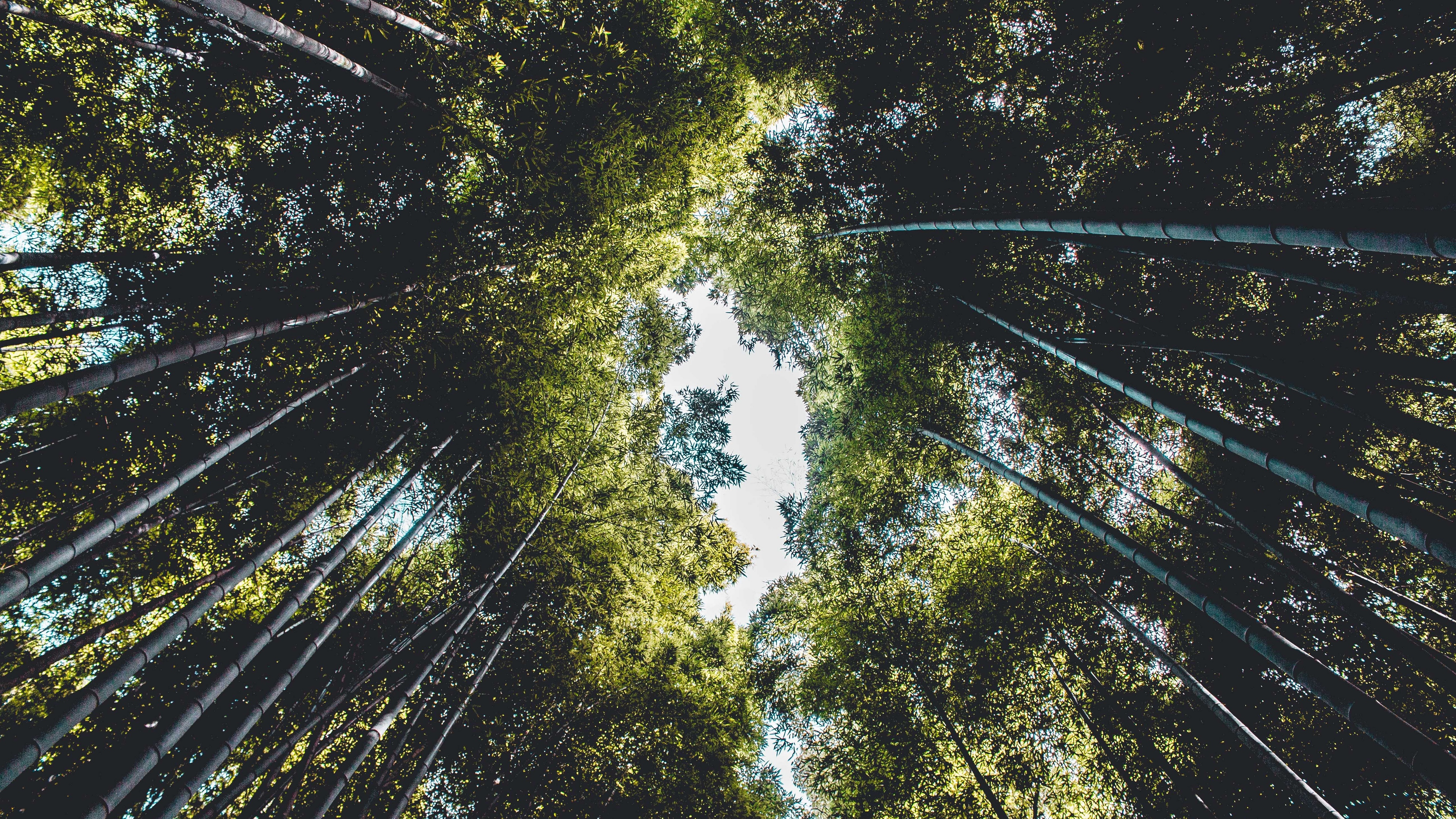 trees bottom view branches sky green leaves 4k 1541116797 - trees, bottom view, branches, sky, green, leaves 4k - Trees, branches, bottom view