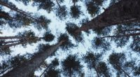 trees bottom view trunks branches 4k 1541114897 200x110 - trees, bottom view, trunks, branches 4k - trunks, Trees, bottom view