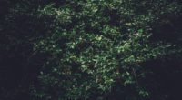 trees branches green 4k 1541116617 200x110 - trees, branches, green 4k - Trees, green, branches