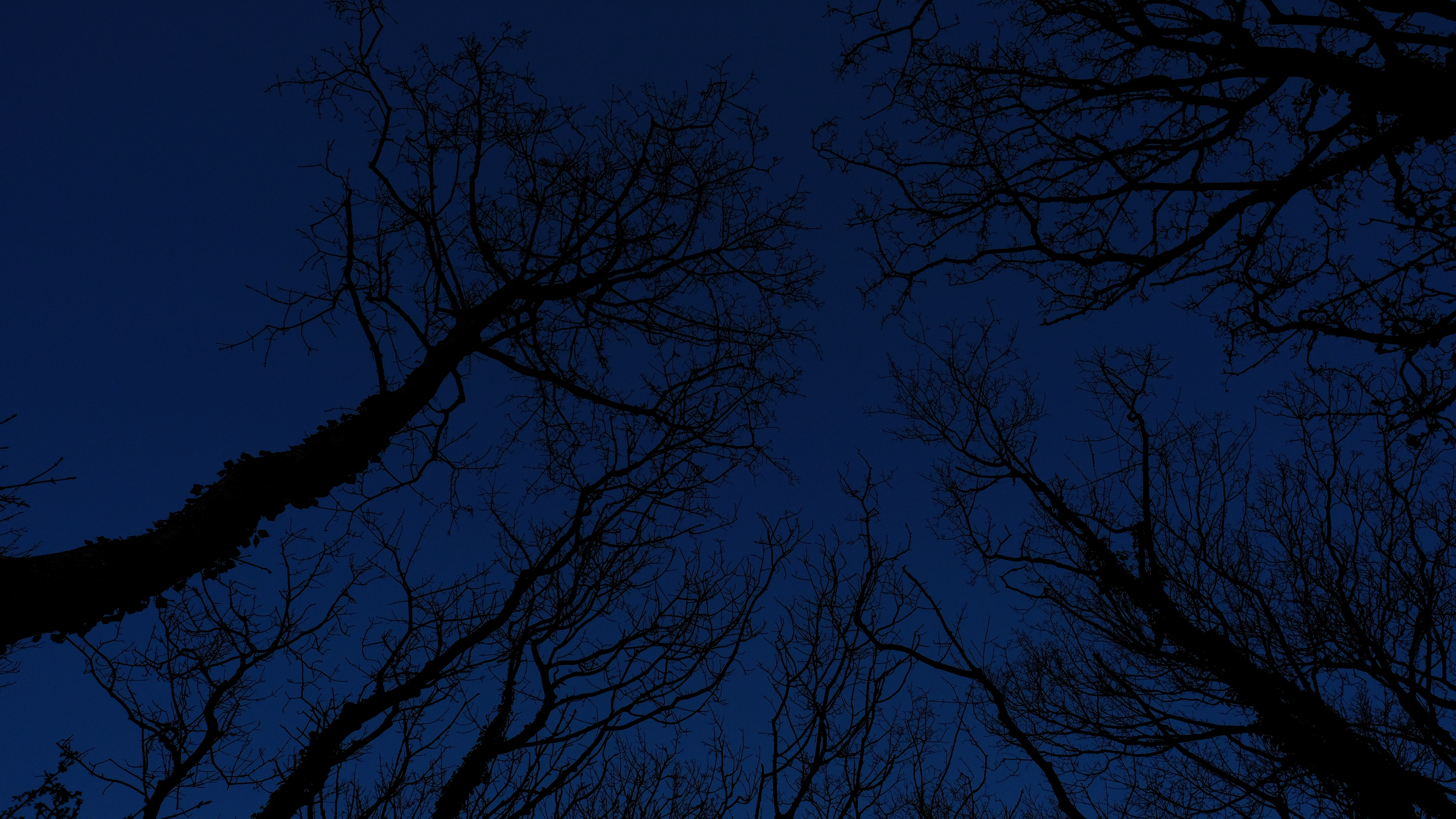 trees branches sky night 4k 1541113468 - trees, branches, sky, night 4k - Trees, Sky, branches