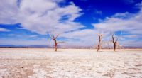 trees desert branches sky clouds dry lake 4k 1541117293 200x110 - trees, desert, branches, sky, clouds, dry lake 4k - Trees, Desert, branches