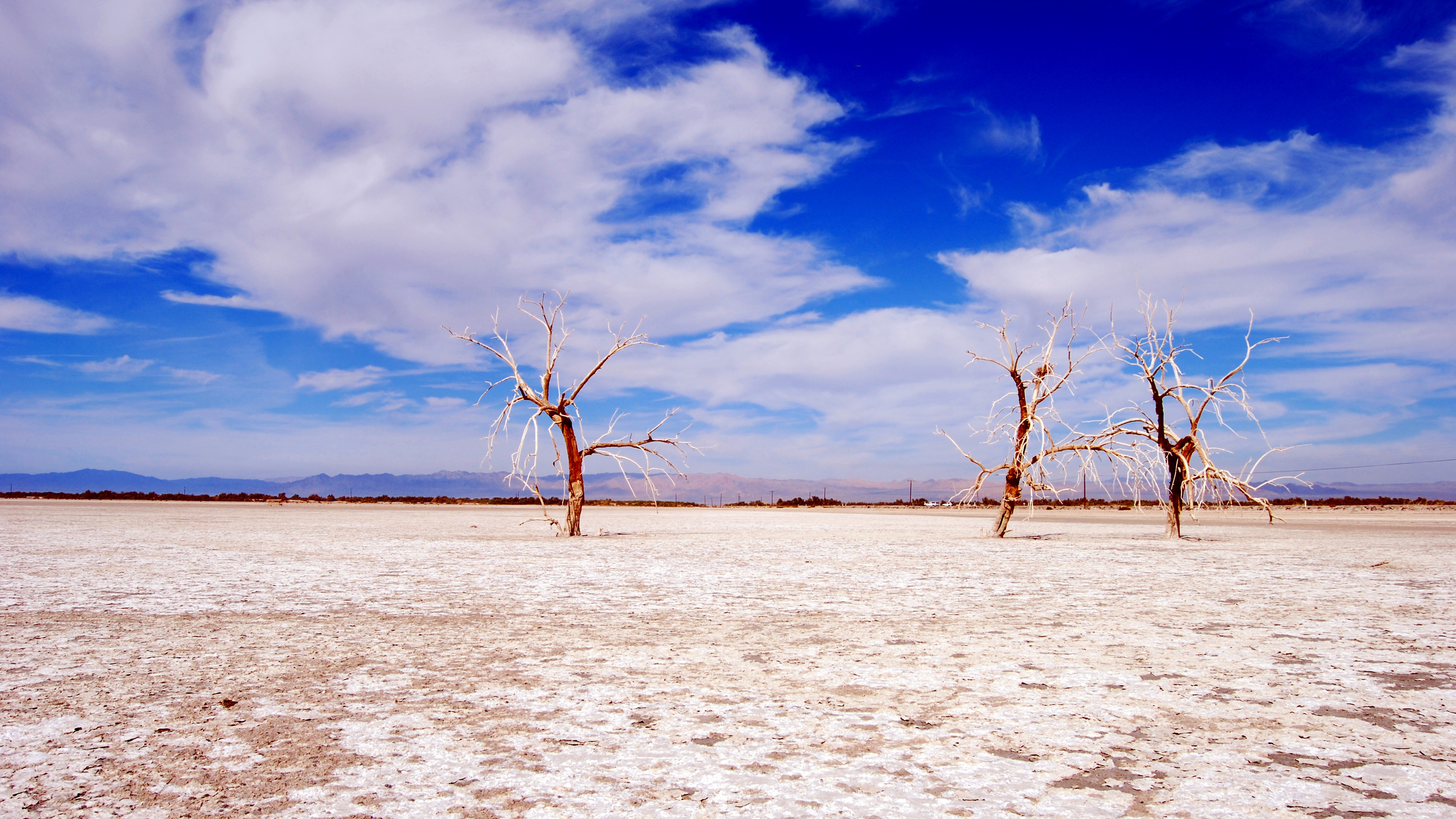 trees desert branches sky clouds dry lake 4k 1541117293 - trees, desert, branches, sky, clouds, dry lake 4k - Trees, Desert, branches