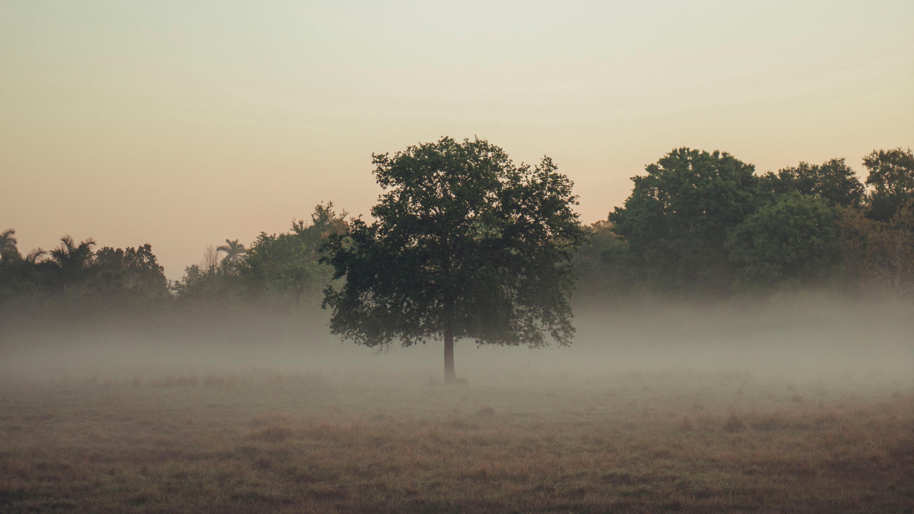 trees fog field 4k 1541116809 - trees, fog, field 4k - Trees, fog, Field