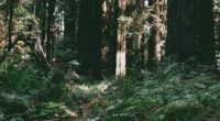 trees forest summer light 4k 1541114890 200x110 - trees, forest, summer, light 4k - Trees, Summer, Forest