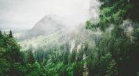 trees mountains fog summer 4k 1541116424 200x110 - trees, mountains, fog, summer 4k - Trees, Mountains, fog