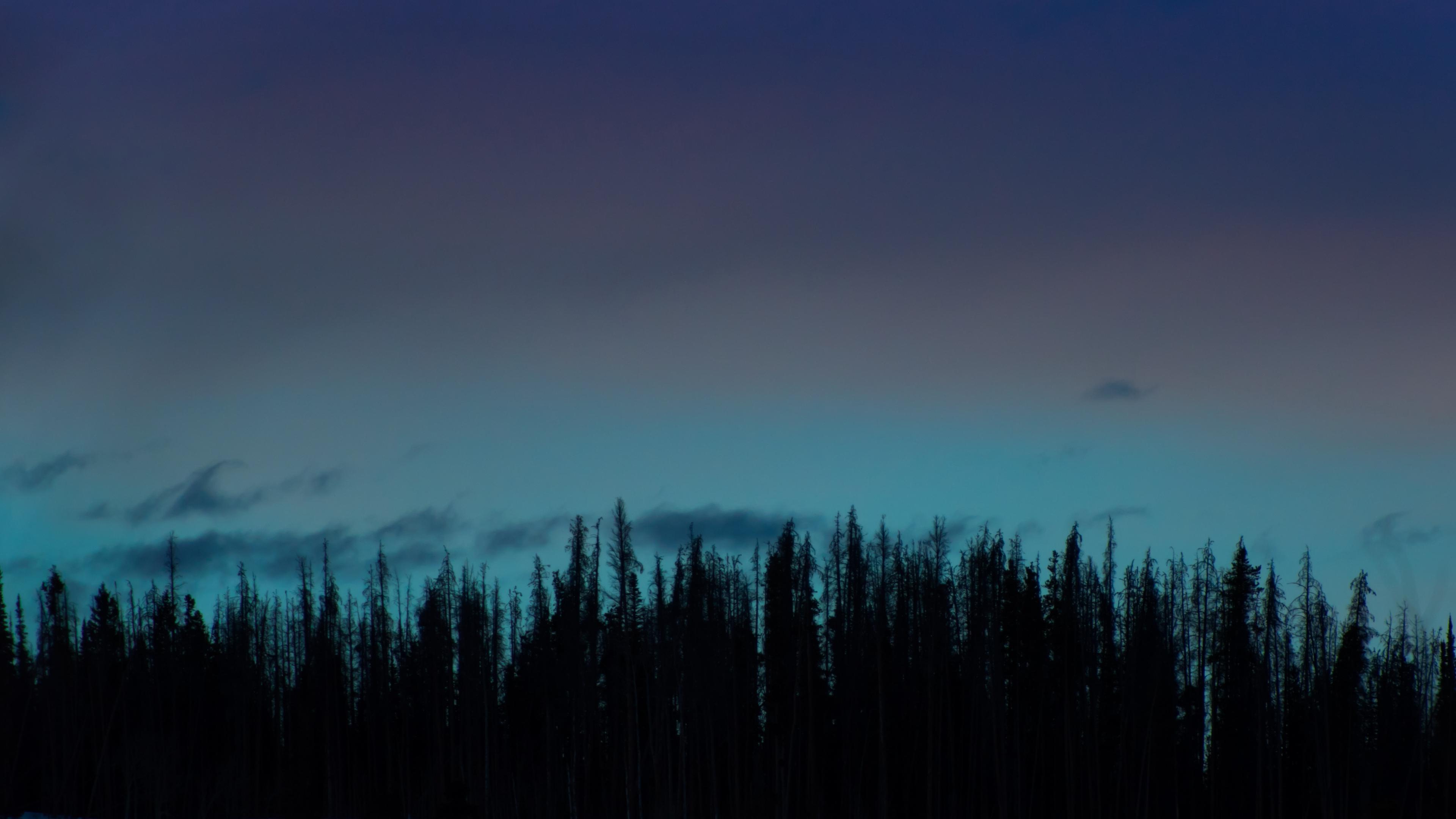 trees night sky 4k 1541114600 - trees, night, sky 4k - Trees, Sky, Night