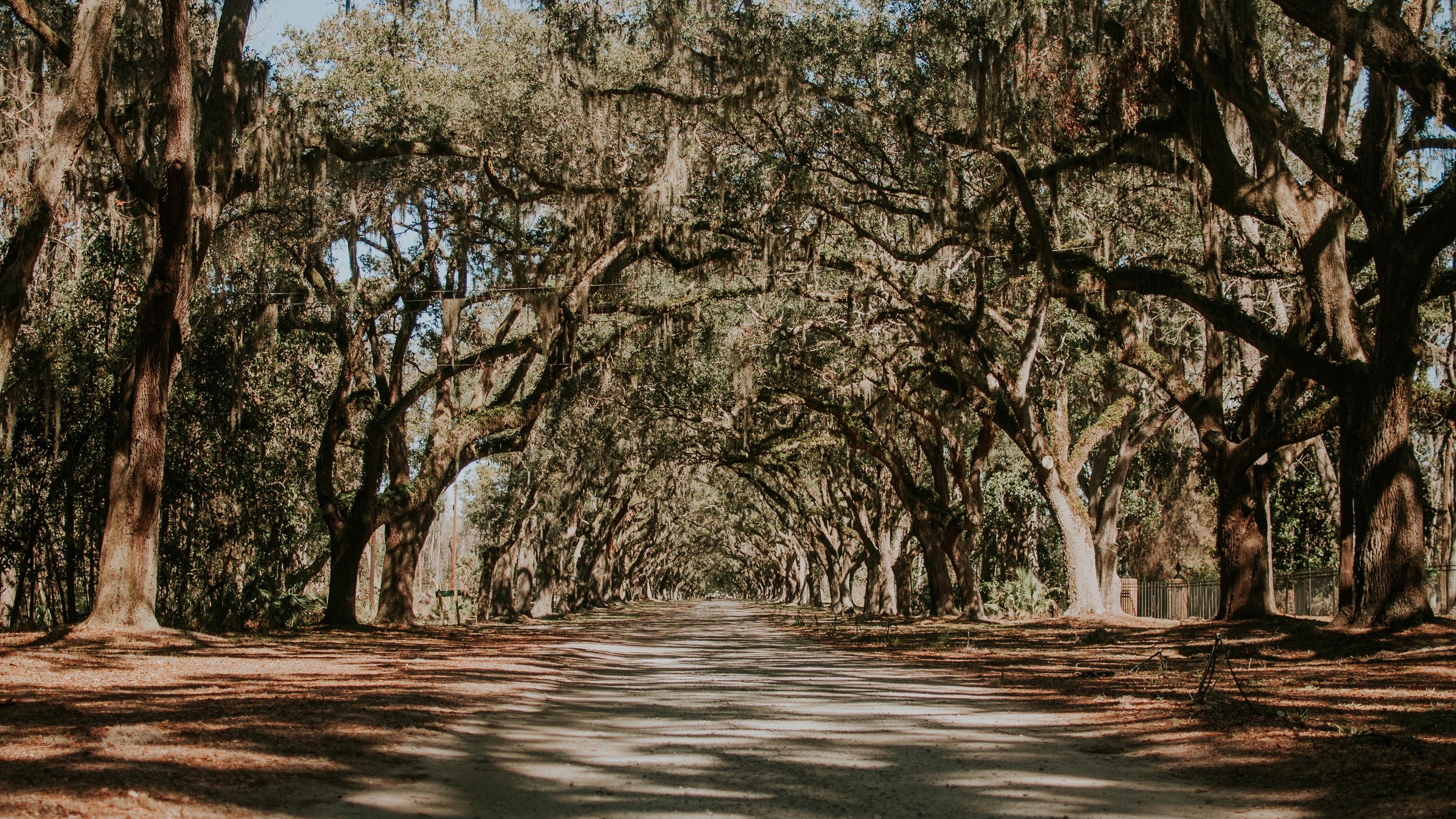 trees park shadow road 4k 1541116360 - trees, park, shadow, road 4k - Trees, Shadow, Park