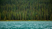 trees river water surface 4k 1541116566 200x110 - trees, river, water, surface 4k - Water, Trees, River