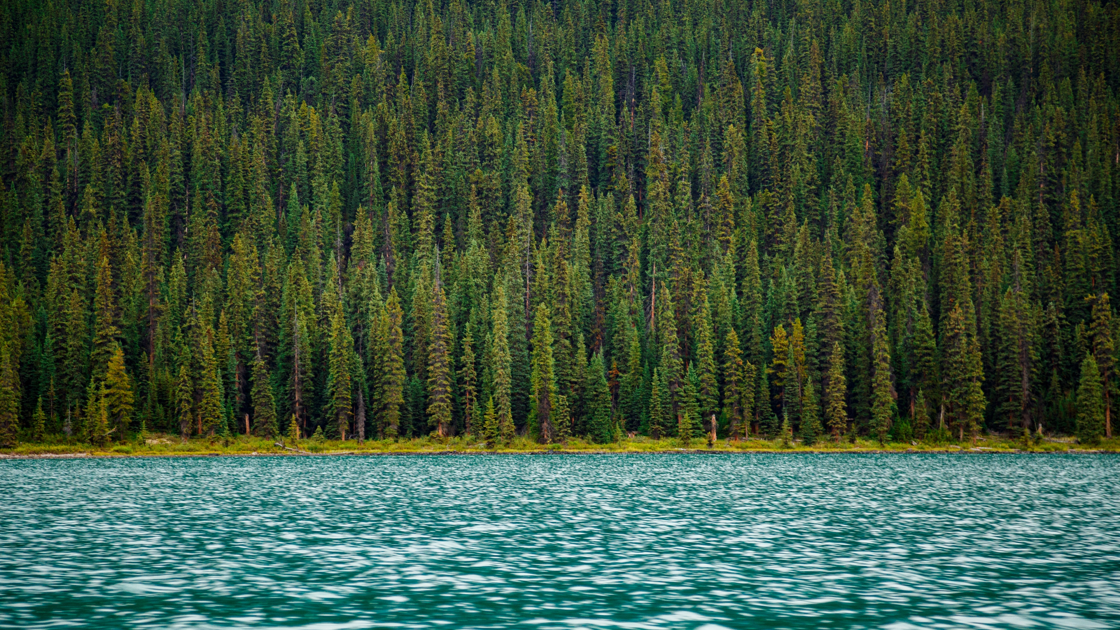 trees river water surface 4k 1541116566 - trees, river, water, surface 4k - Water, Trees, River