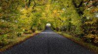 trees road autumn scotland 4k 1541115254 200x110 - trees, road, autumn, scotland 4k - Trees, Road, Autumn