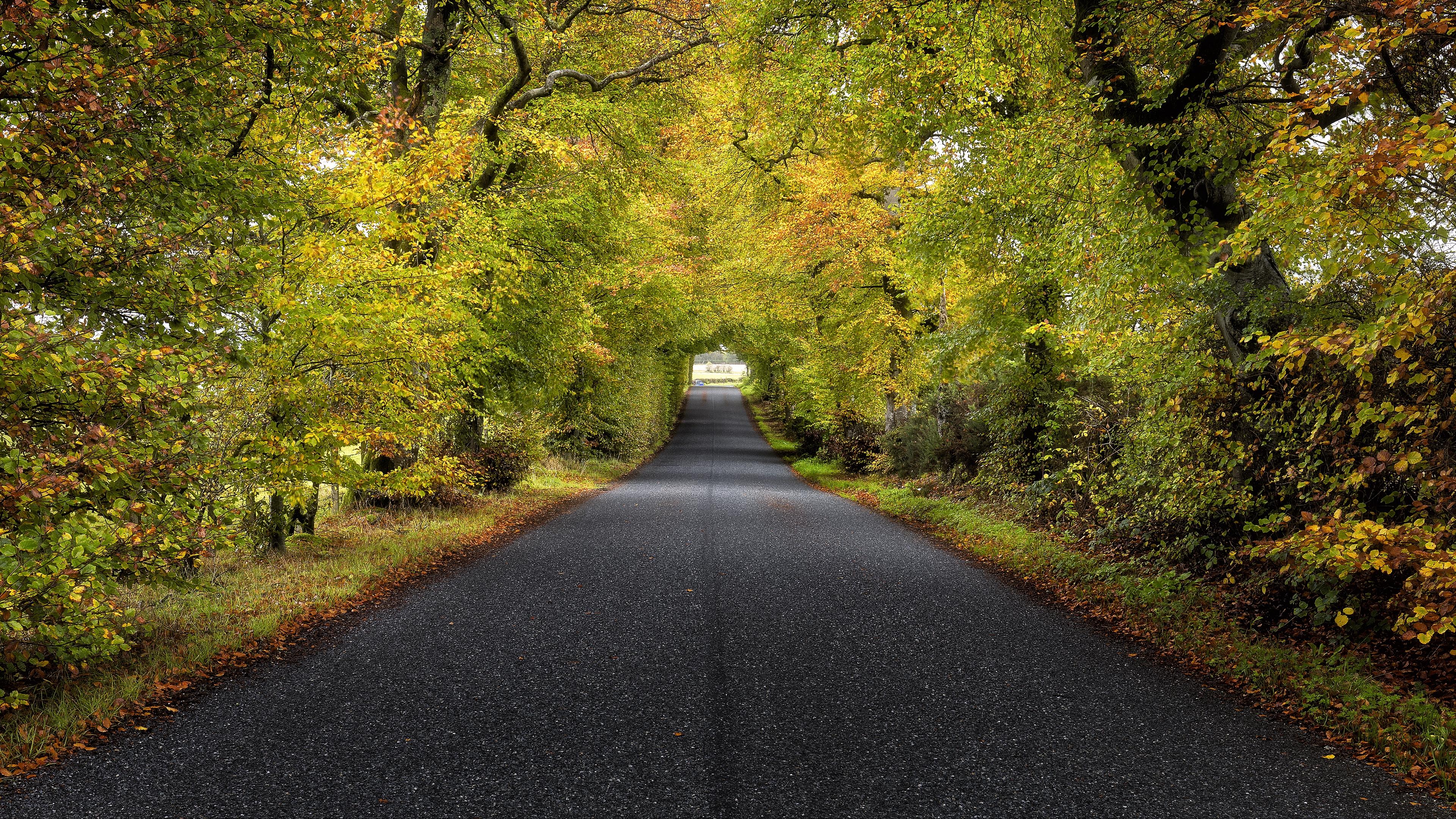 trees road autumn scotland 4k 1541115254 - trees, road, autumn, scotland 4k - Trees, Road, Autumn