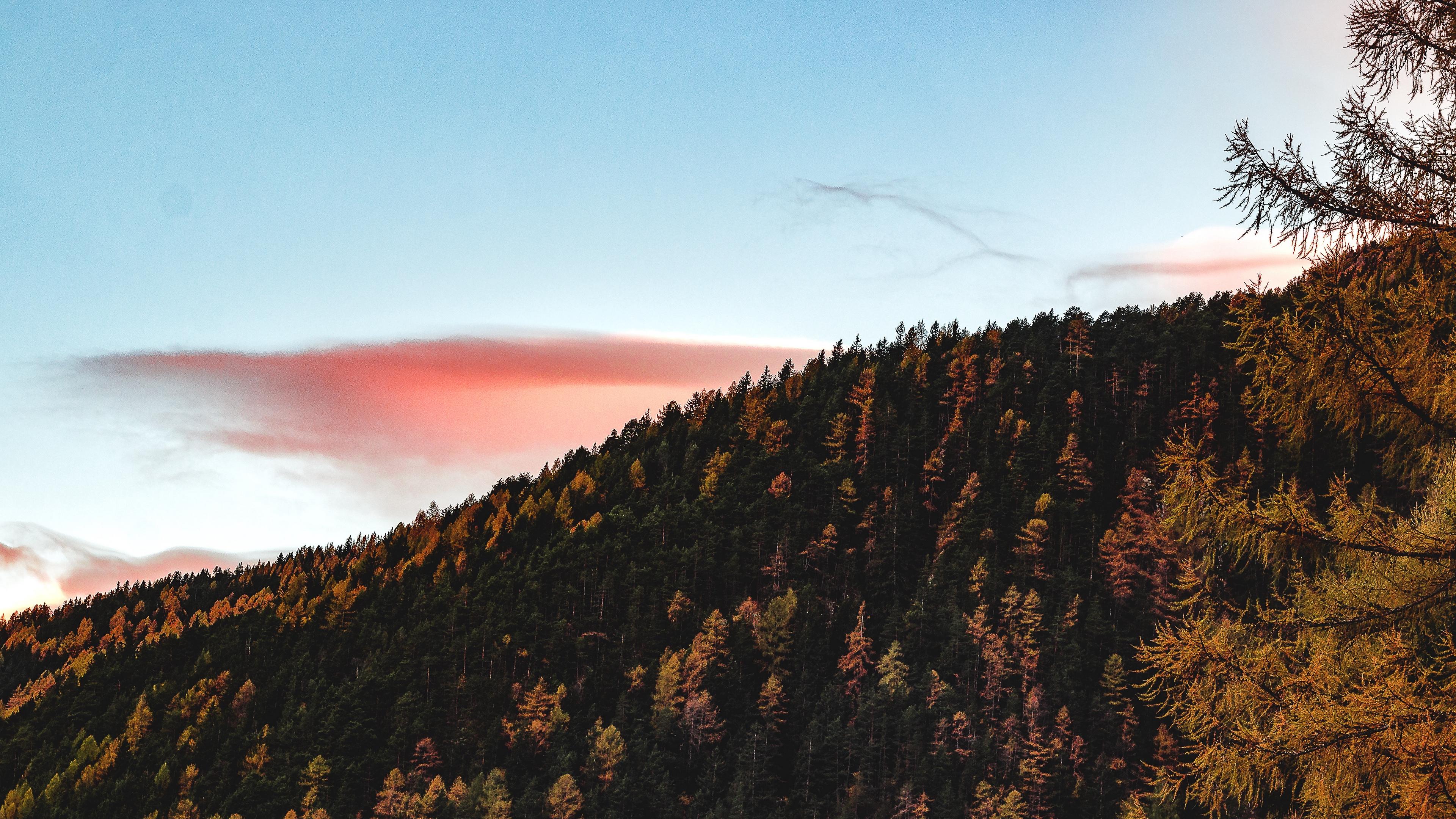 trees sky autumn hill 4k 1541114076 - trees, sky, autumn, hill 4k - Trees, Sky, Autumn