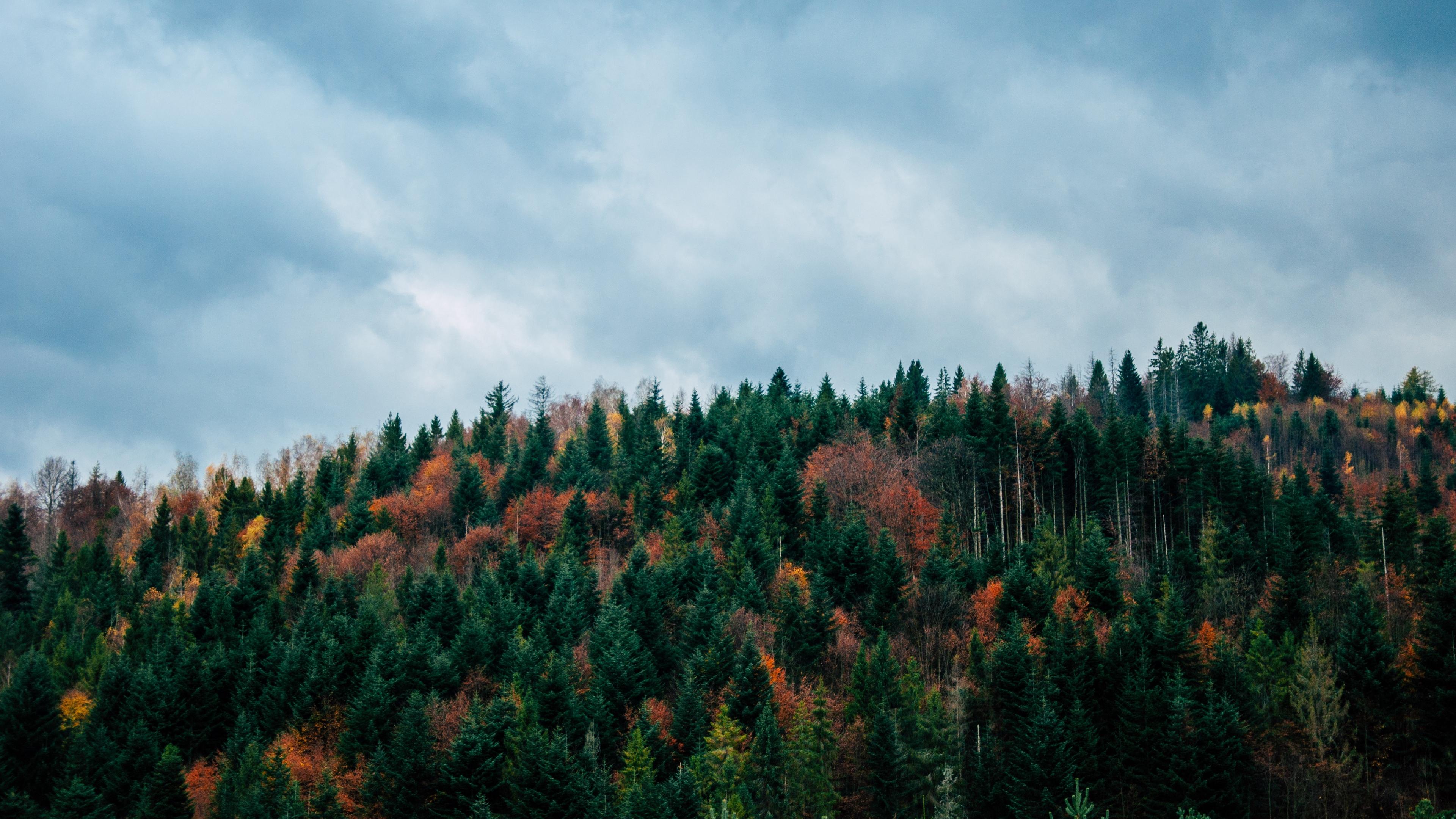 trees sky autumn top 4k 1541116610 - trees, sky, autumn, top 4k - Trees, Sky, Autumn