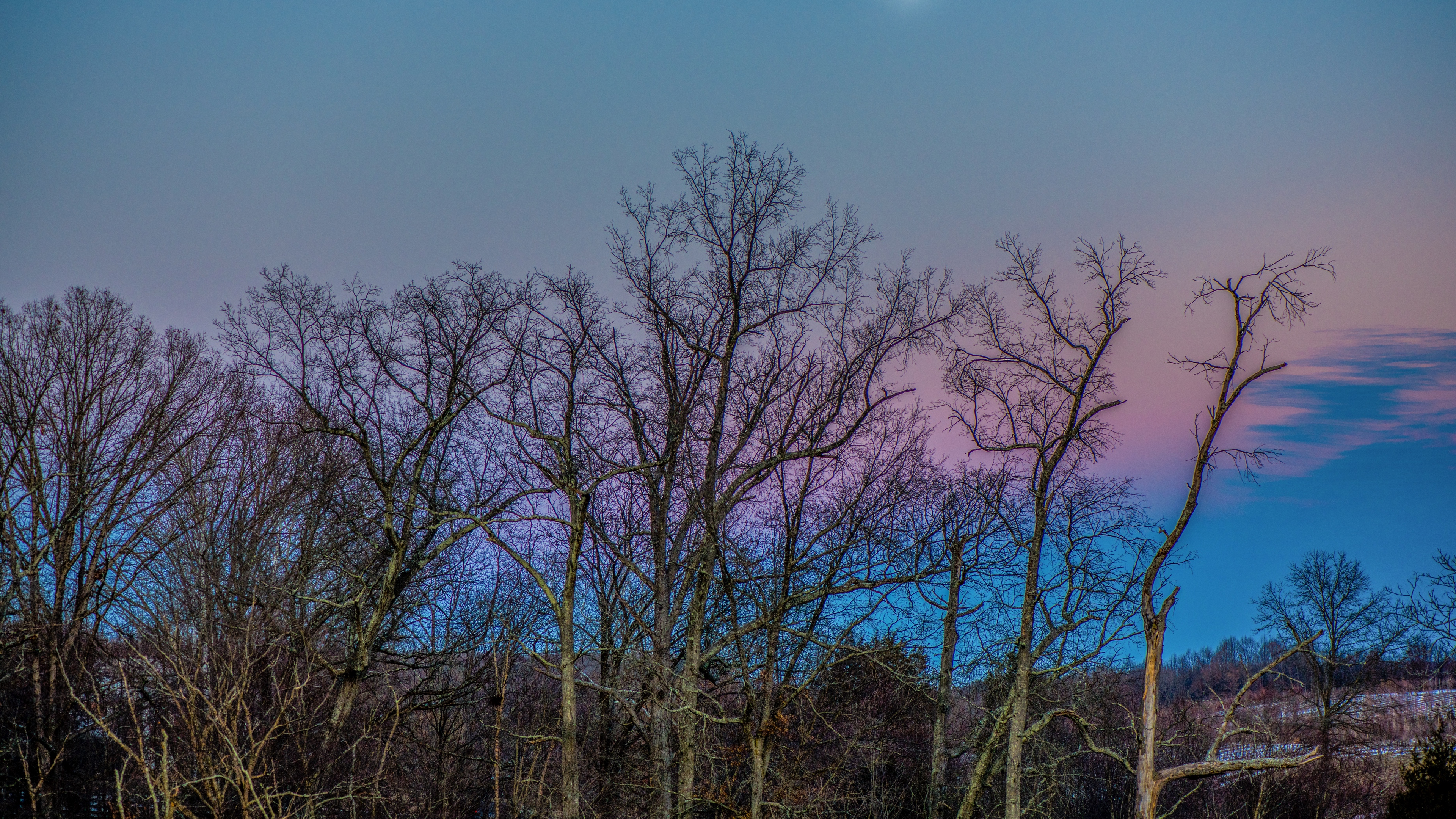 trees sky moon branches 4k 1541117393 - trees, sky, moon, branches 4k - Trees, Sky, Moon