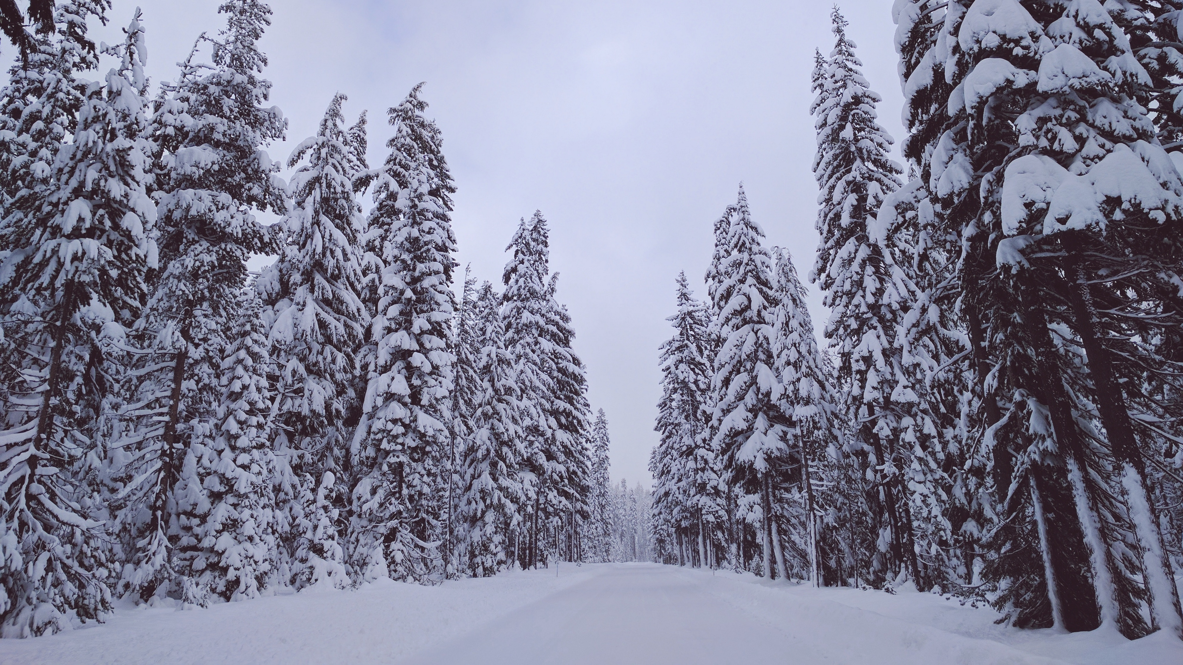 trees snow winter 4k 1541116624 - trees, snow, winter 4k - Winter, Trees, Snow
