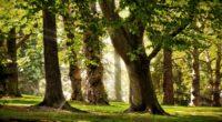 trees sun light may beams park 4k 1541114710 200x110 - trees, sun, light, may, beams, park 4k - Trees, Sun, Light