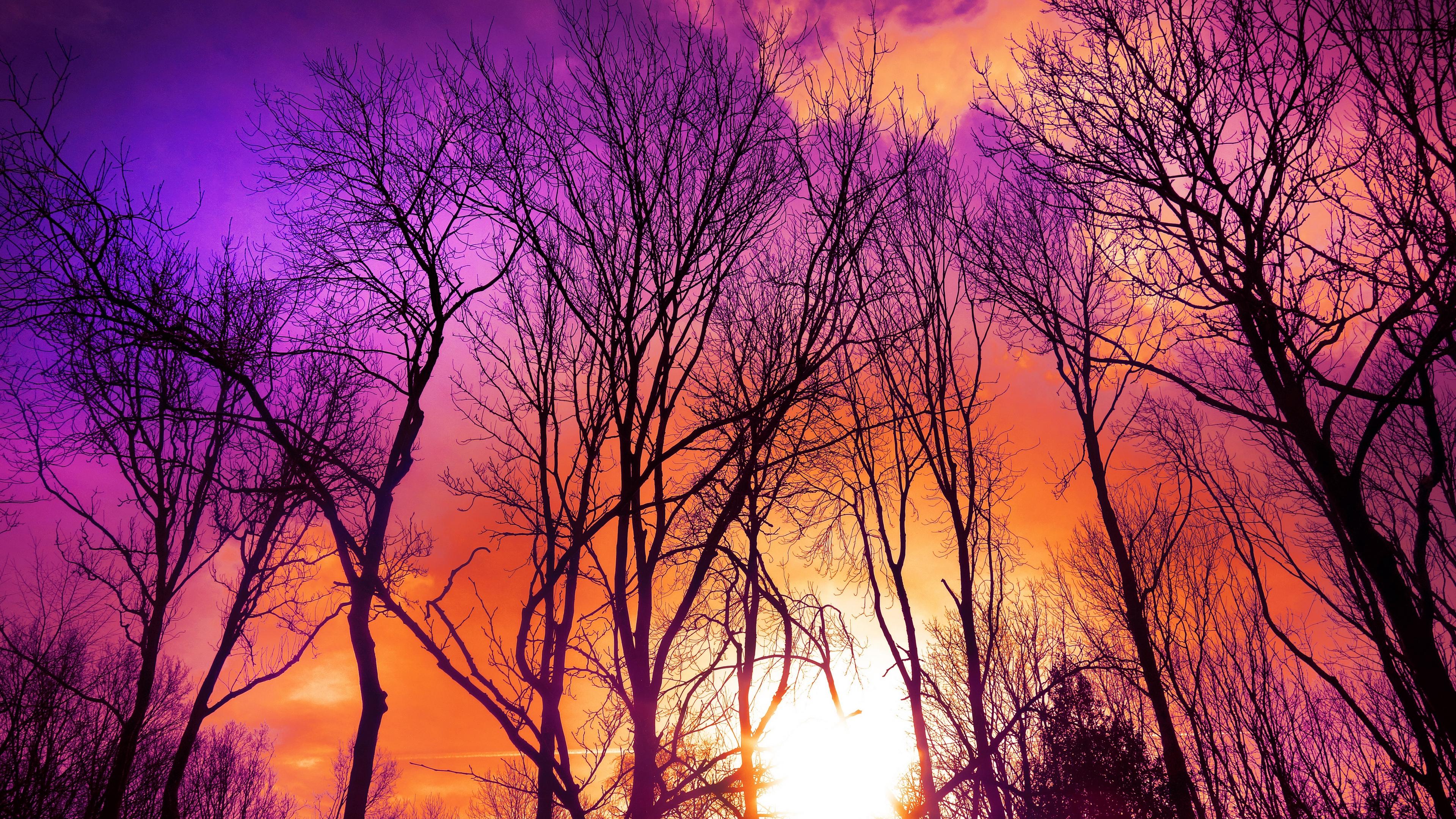 trees sunset autumn 4k 1541117361 - trees, sunset, autumn 4k - Trees, sunset, Autumn