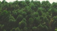 trees top view foliage 4k 1541116474 200x110 - trees, top view, foliage 4k - Trees, top view, foliage