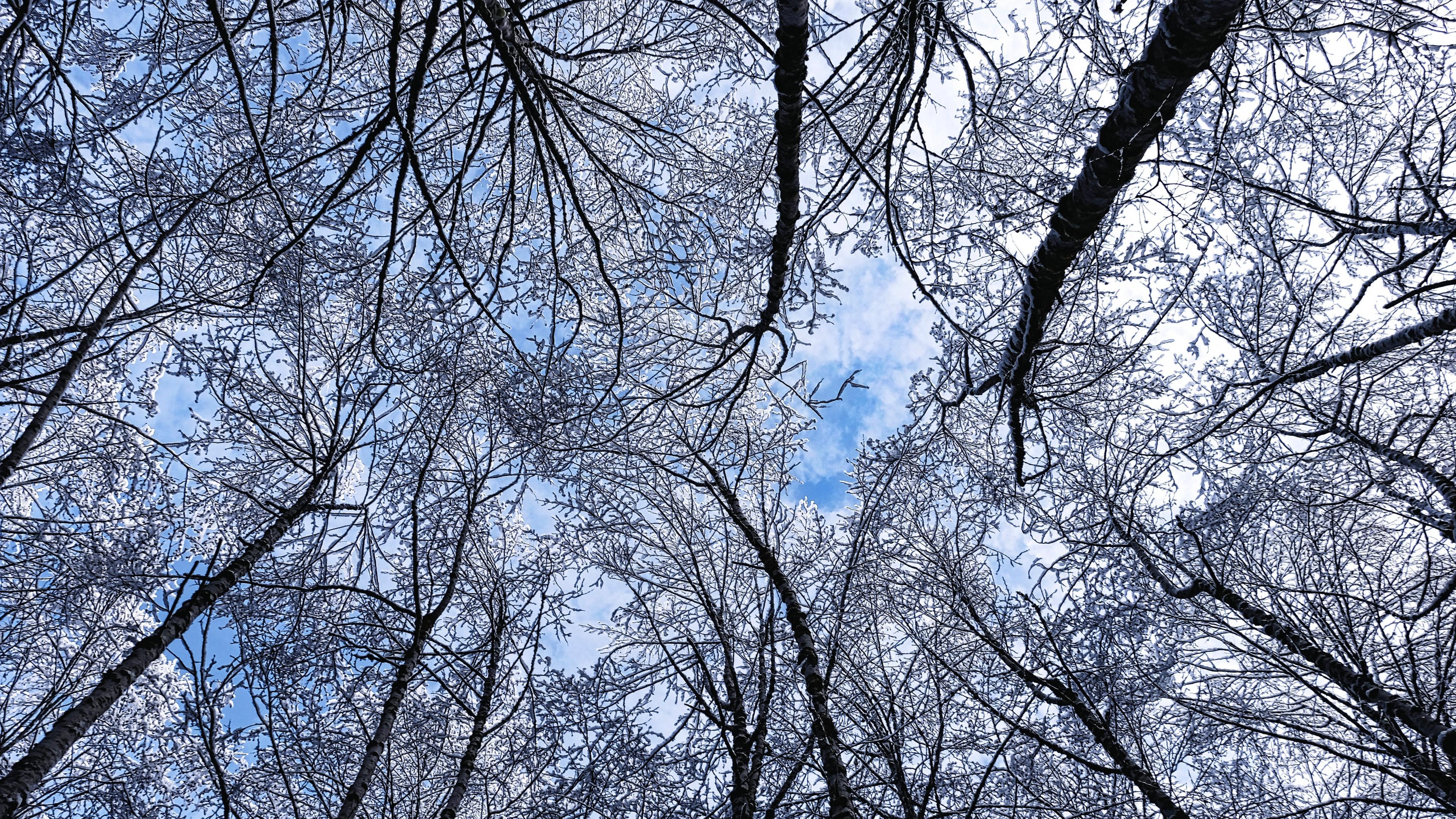 trees winter hoarfrost sky bottom view 4k 1541114156 - trees, winter, hoarfrost, sky, bottom view 4k - Winter, Trees, hoarfrost