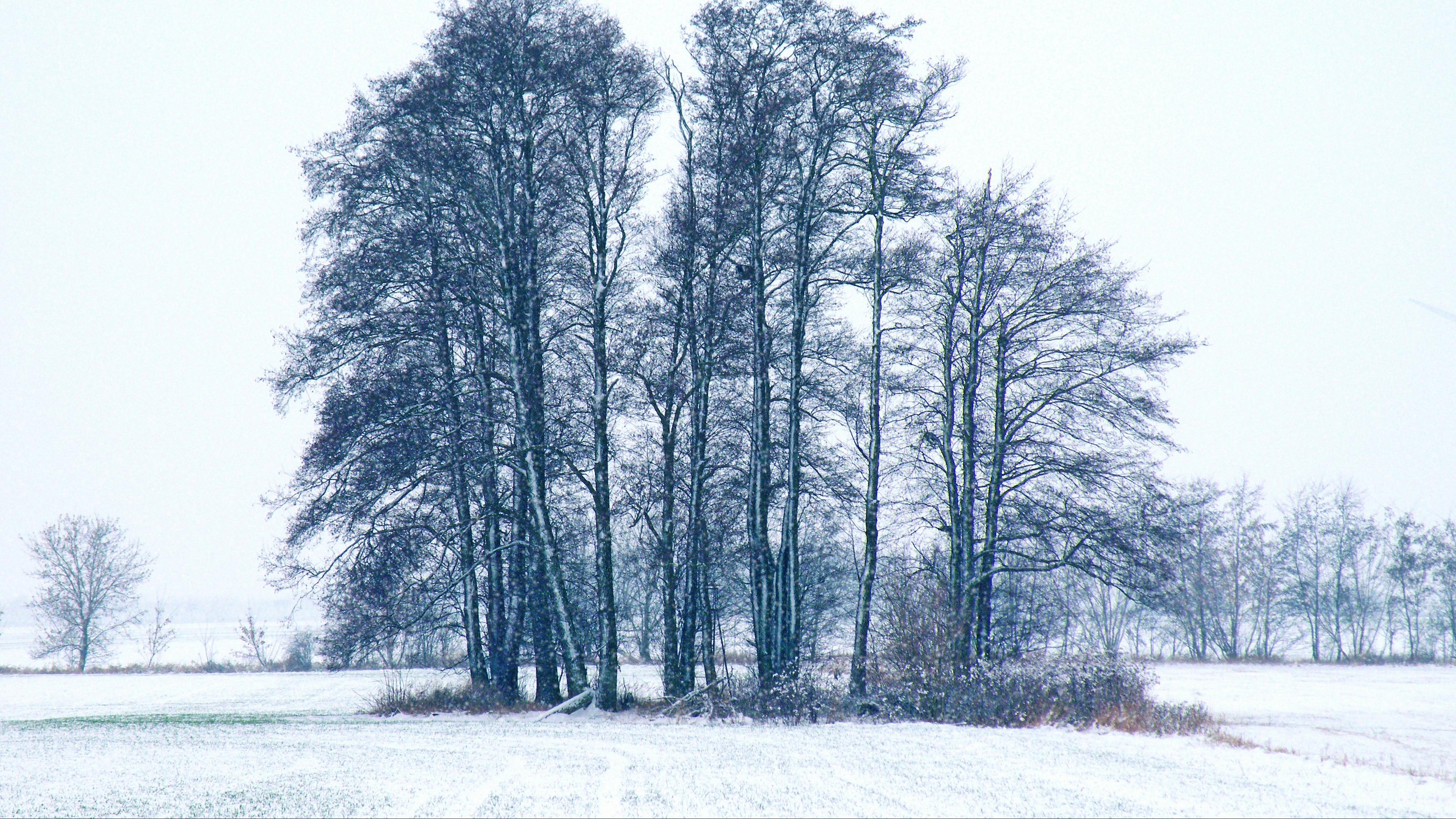 trees winter snow 4k 1541116555 - trees, winter, snow 4k - Winter, Trees, Snow