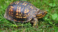 turtle shell grass 4k 1542242490 200x110 - turtle, shell, grass 4k - Turtle, Shell, Grass