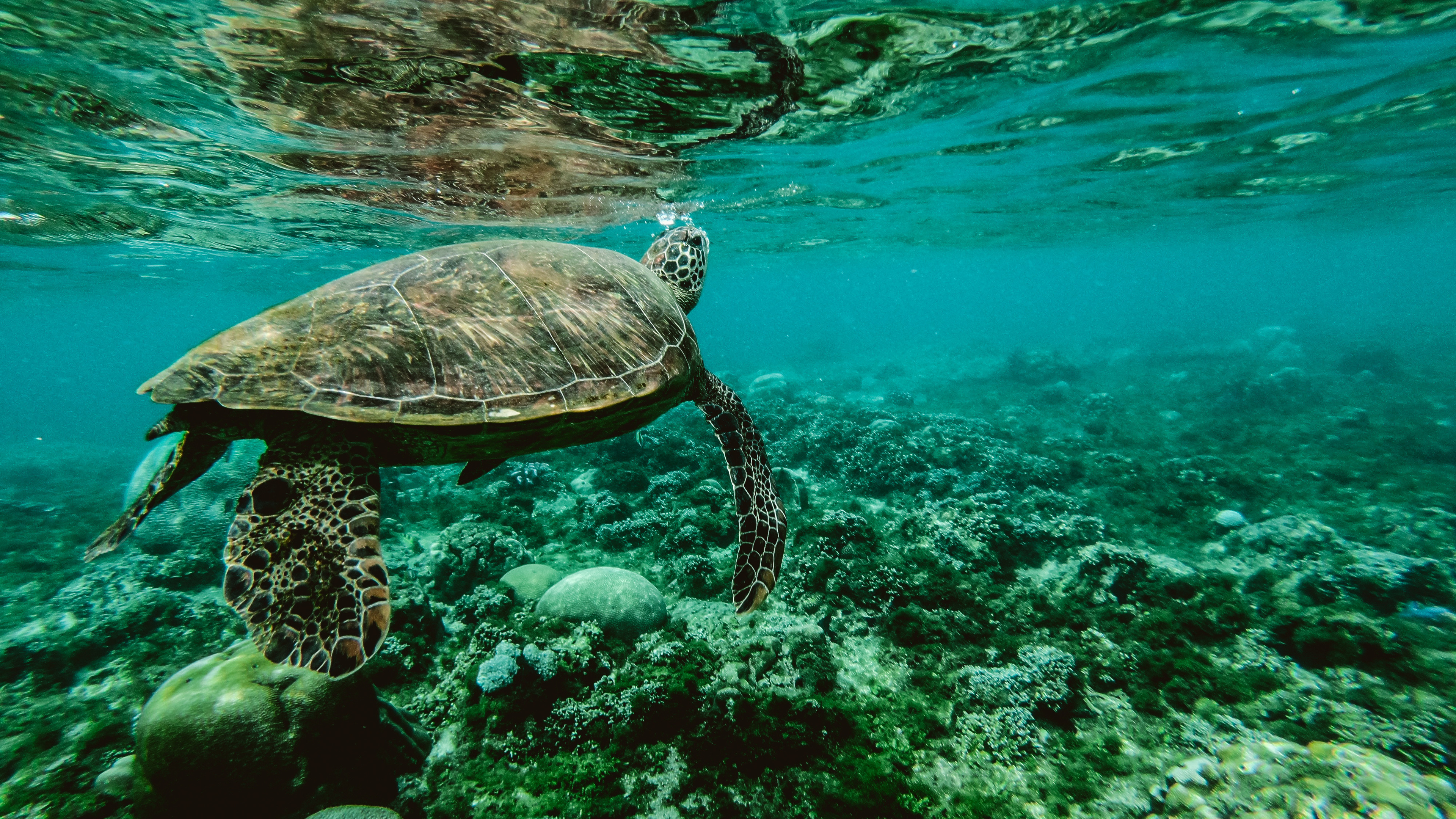 turtle underwater 1542238889 - Turtle Underwater - underwater wallpapers, turtle wallpapers, sea wallpapers, reptile wallpapers, hd-wallpapers, animals wallpapers, 4k-wallpapers