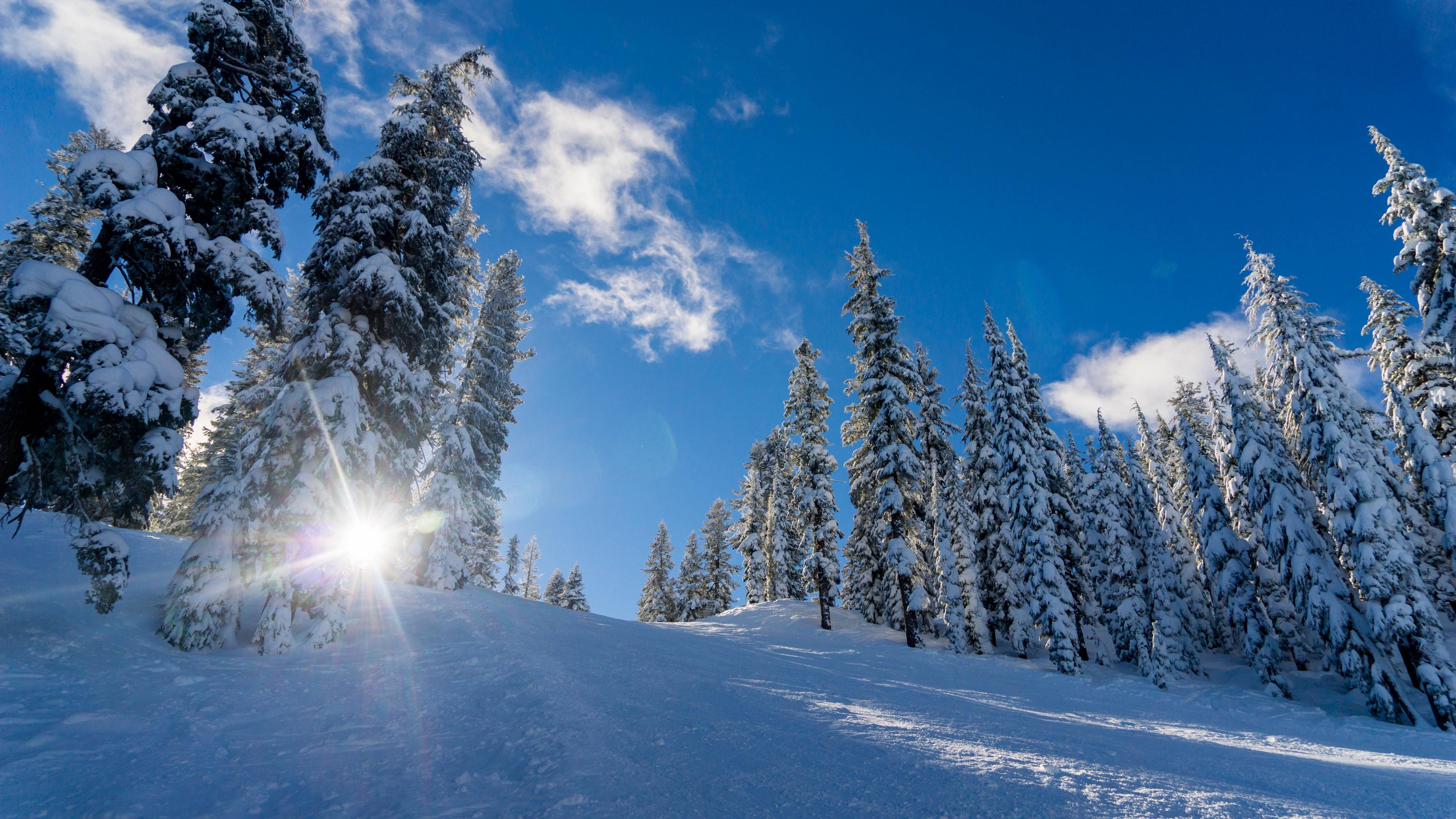winter snow sunlight trees 4k 1541117797 - winter, snow, sunlight, trees 4k - Winter, Sunlight, Snow