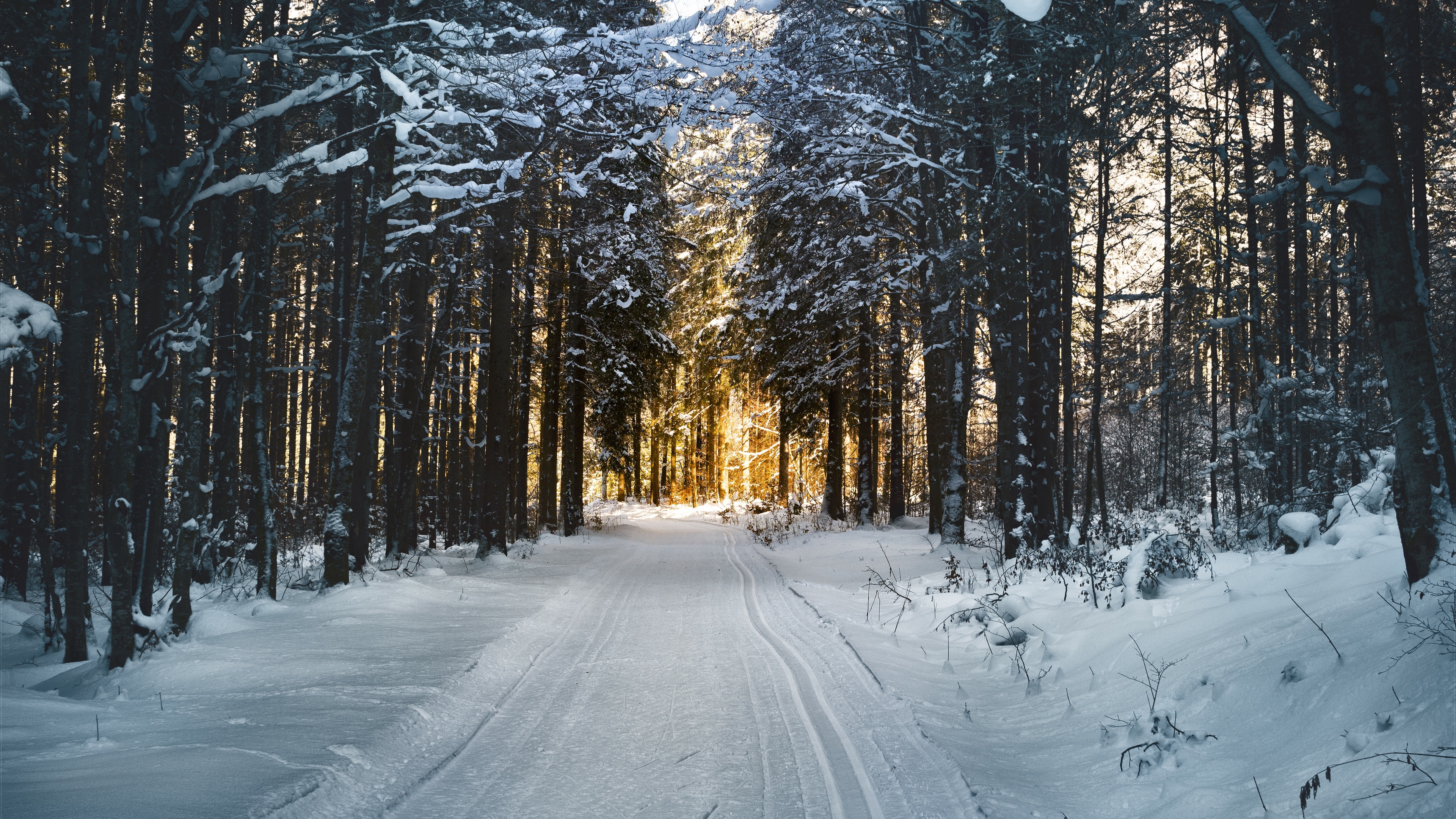 winter trees forest road 4k 1541114488 - winter, trees, forest, road 4k - Winter, Trees, Forest