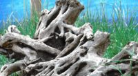 wood old roots branches 4k 1541117351 200x110 - wood, old, roots, branches 4k - wood, roots, Old