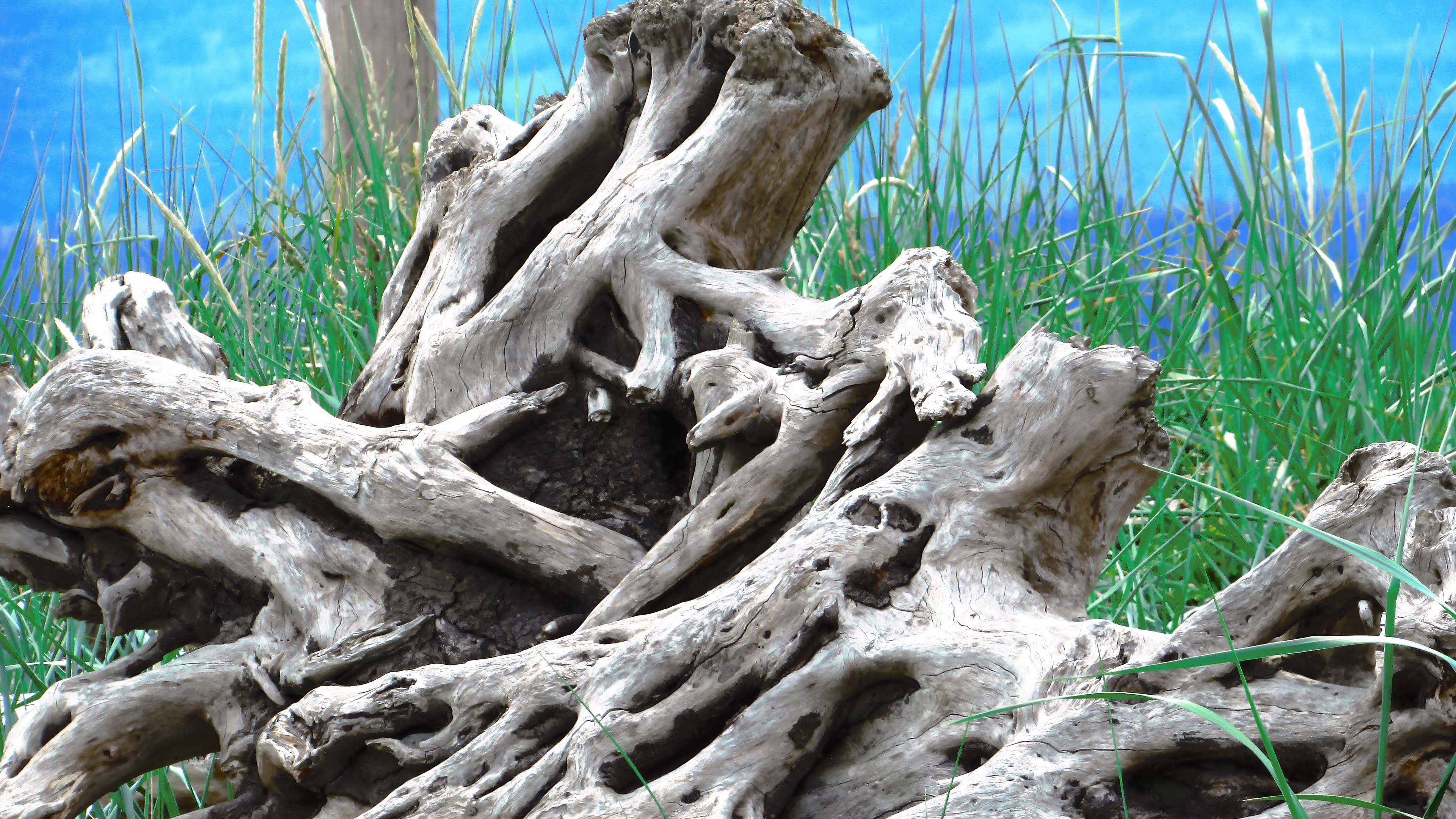 wood old roots branches 4k 1541117351 - wood, old, roots, branches 4k - wood, roots, Old