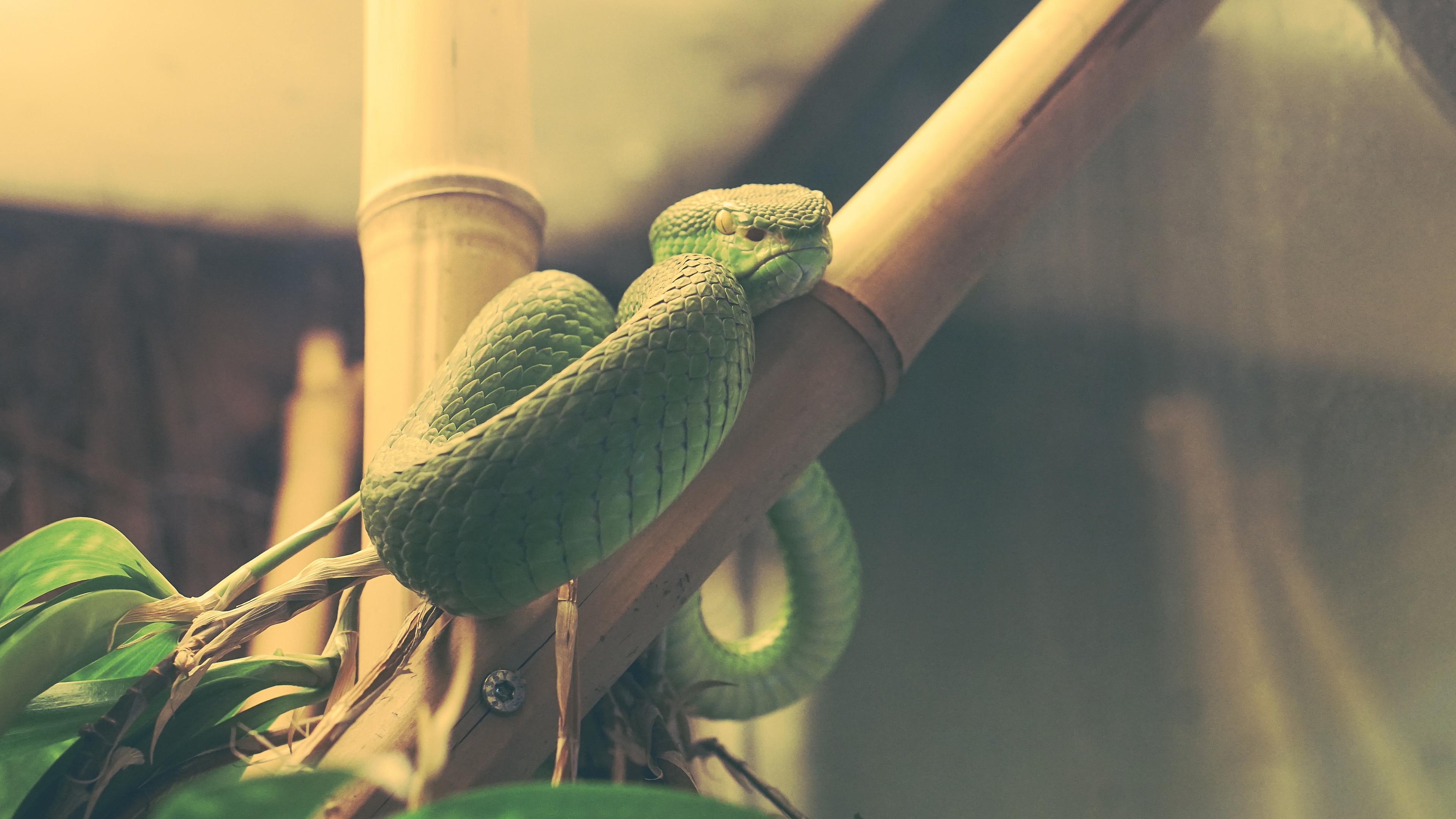 wood snake snake terrarium reptile 4k 1542241455 - wood snake, snake, terrarium, reptile 4k - wood snake, terrarium, Snake