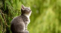 young cat 4k 1542238388 200x110 - Young Cat 4k - hd-wallpapers, cat wallpapers, animals wallpapers, 4k-wallpapers
