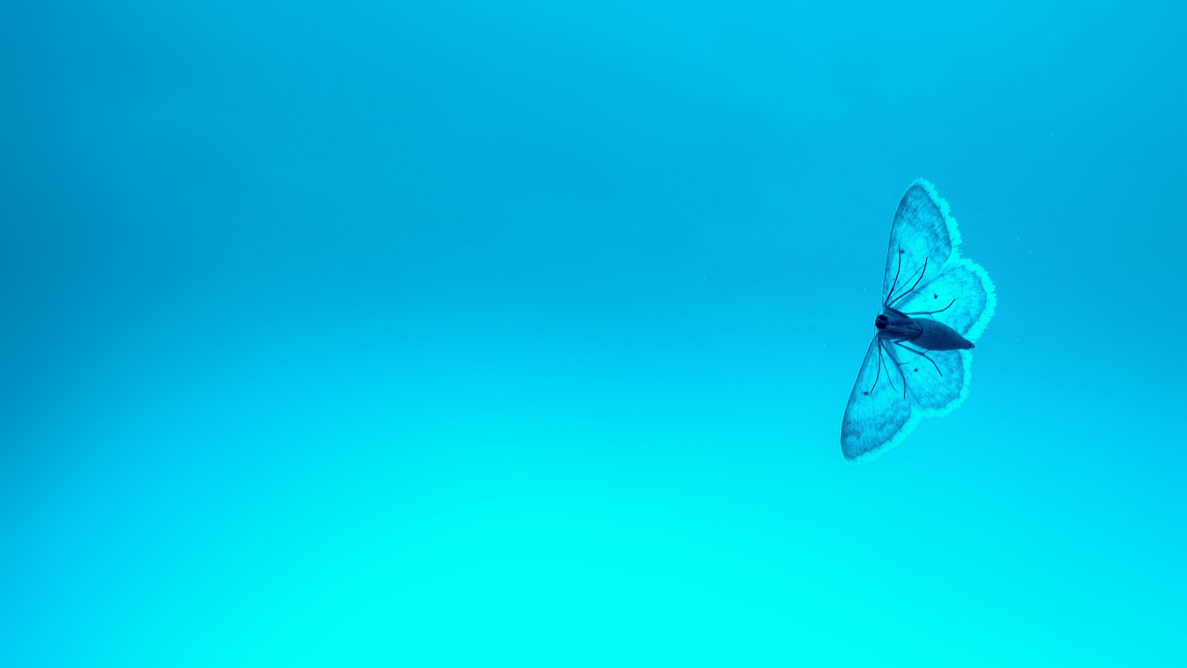 blue butterfly 4k 1546279442 - Blue Butterfly 4k - hd-wallpapers, butterfly wallpapers, animals wallpapers, 4k-wallpapers