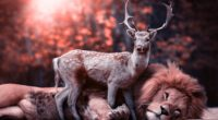 lion deer 4k 1546279504 200x110 - Lion Deer 4k - photography wallpapers, lion wallpapers, hd-wallpapers, deer wallpapers, animals wallpapers, 5k wallpapers, 4k-wallpapers