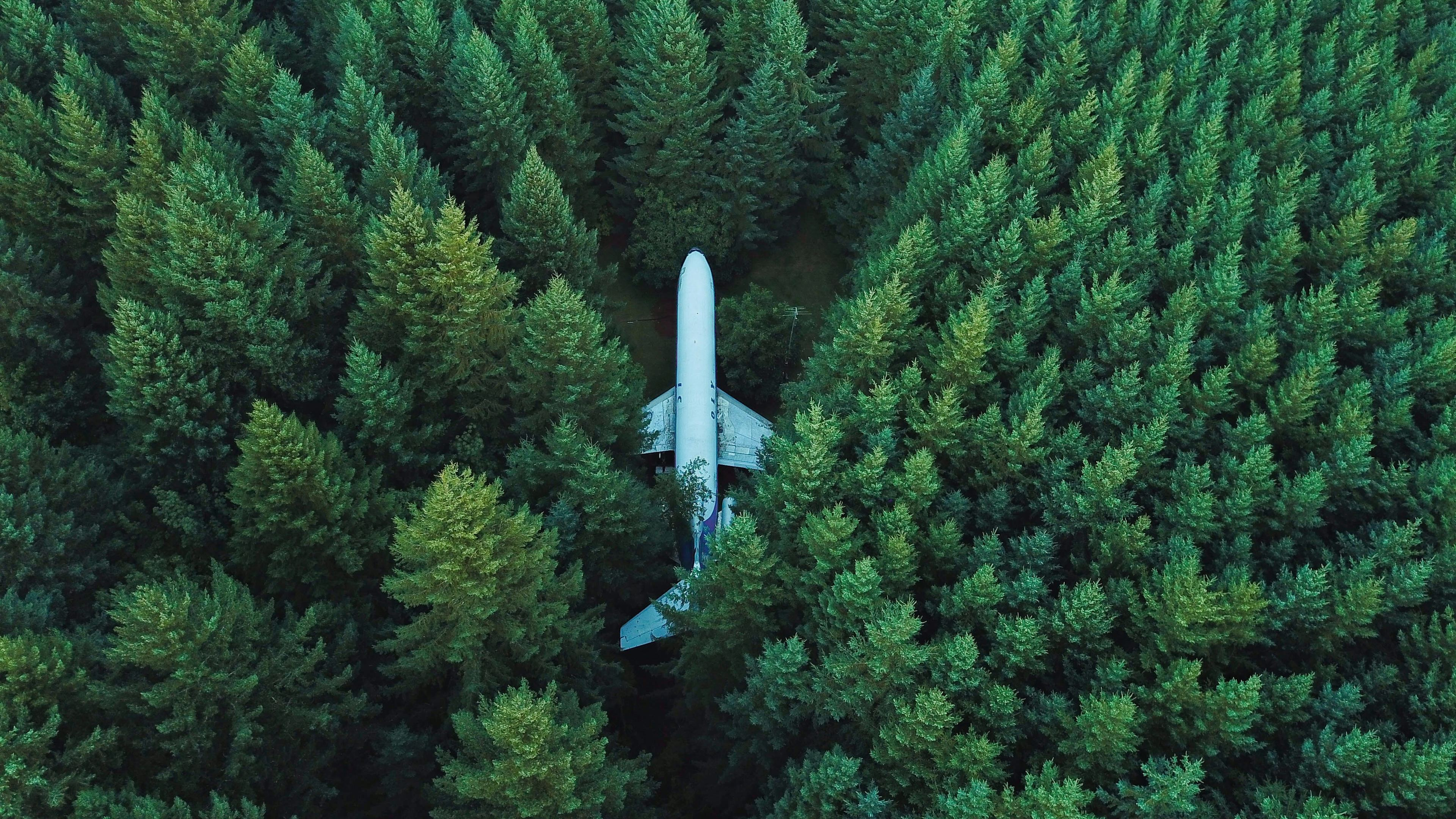 Wallpaper 4k Plane In Middle Of Forest 4k 4k Wallpapers Forest Wallpapers Hd Wallpapers Nature Wallpapers Planes Wallpapers