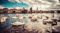swans moldau river czech republic 4k 1547320037 200x110 - Swans Moldau River Czech Republic 4k - swan wallpapers, river wallpapers, photography wallpapers, hd-wallpapers, 5k wallpapers, 4k-wallpapers