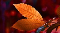 autumn colour leaf 4k 1551643791 200x110 - Autumn Colour Leaf 4k - photography wallpapers, nature wallpapers, leaf wallpapers, hd-wallpapers, autumn wallpapers, 4k-wallpapers