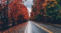 autumn road trees on sides fallen leaves 1551643623 200x110 - Autumn Road Trees On Sides Fallen Leaves - trees wallpapers, photography wallpapers, nature wallpapers, leaves wallpapers, hd-wallpapers, autumn wallpapers, 4k-wallpapers