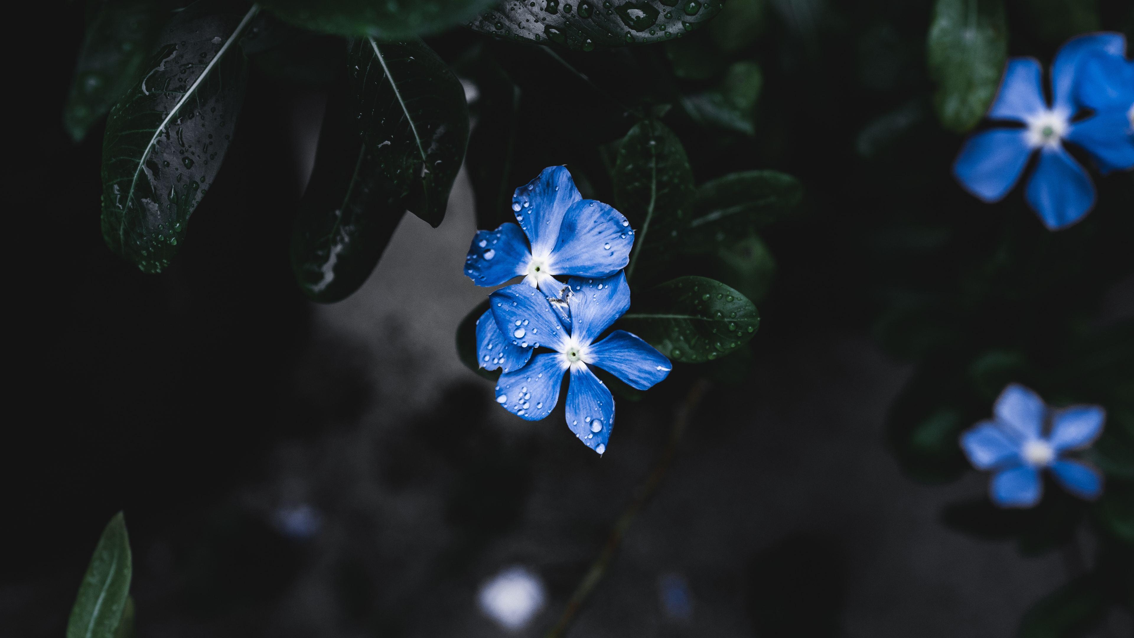 blue plant flower 1551643810 - Blue Plant Flower - nature wallpapers, hd-wallpapers, flower wallpapers, 4k-wallpapers