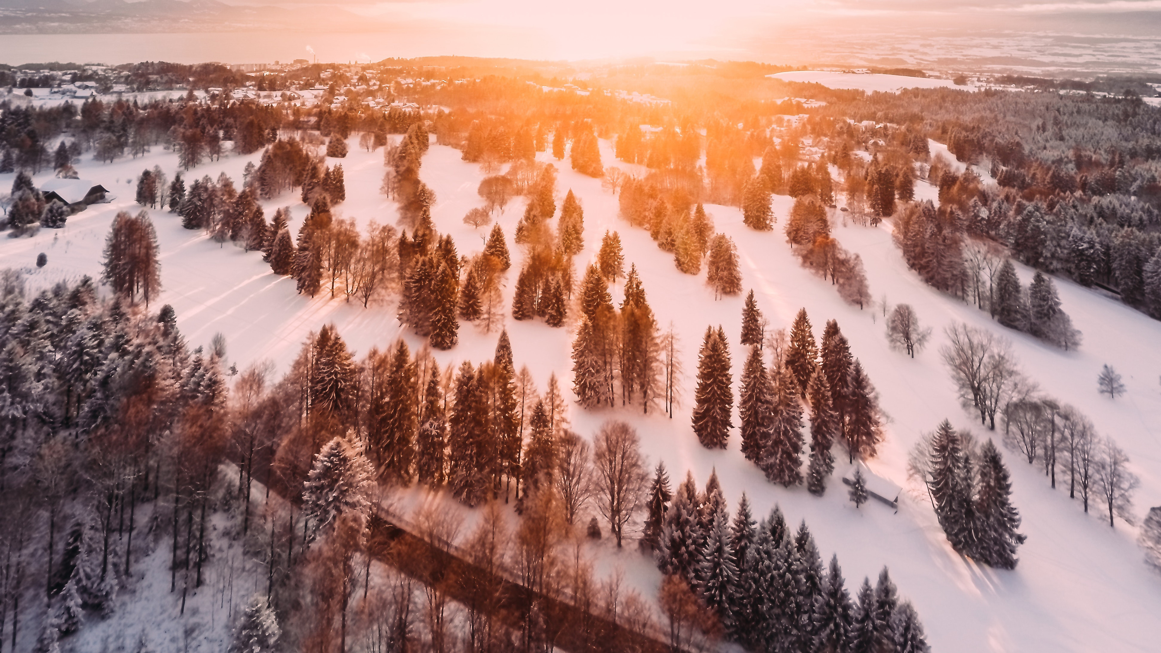 cold forest pine trees morning 4k 1551644053 - Cold Forest Pine Trees Morning 4k - trees wallpapers, sunbeam wallpapers, snow wallpapers, pine wallpapers, nature wallpapers, morning wallpapers, hd-wallpapers, forest wallpapers, 4k-wallpapers