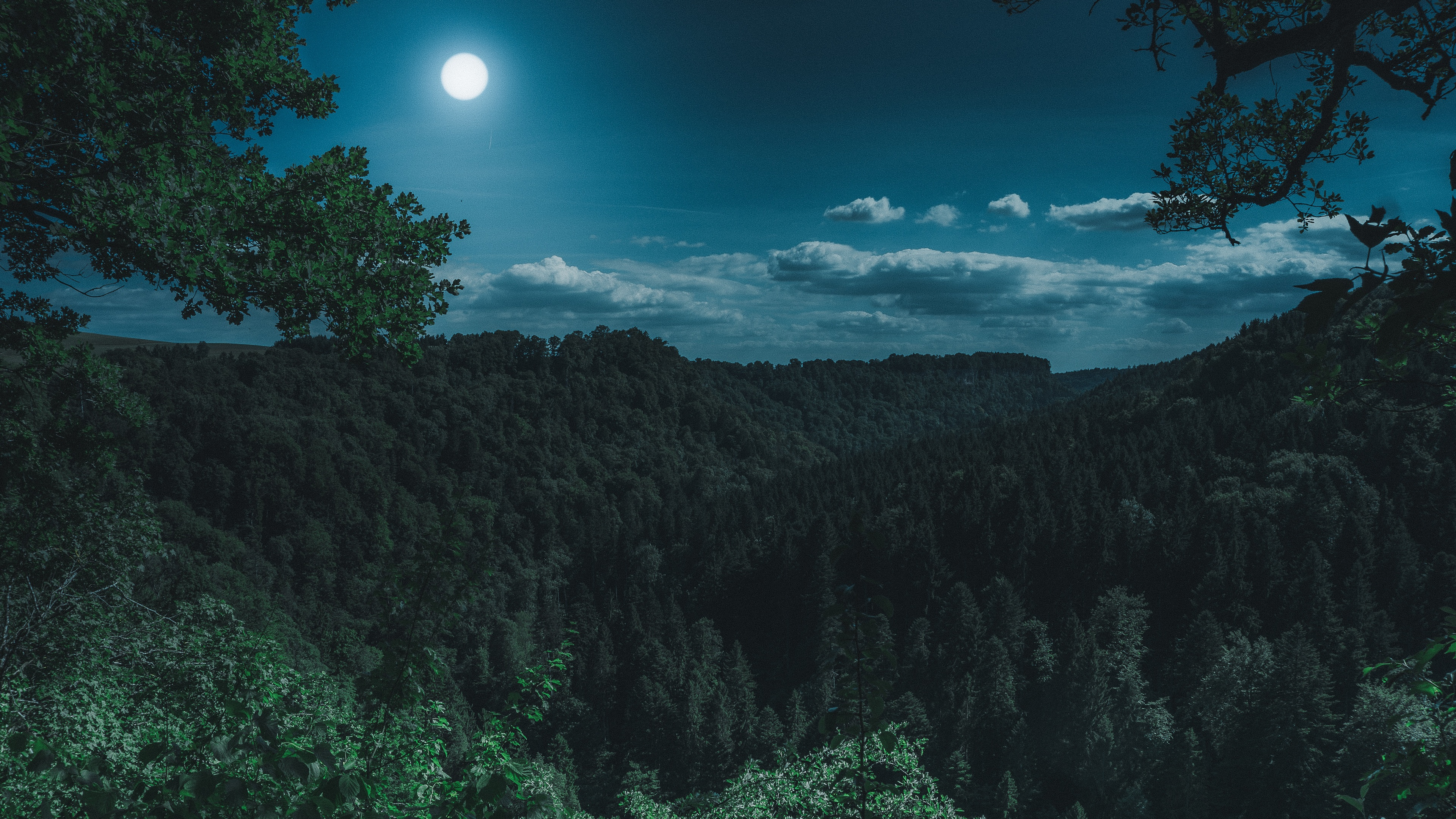 dark night forest view 4k 1551643806 - Dark Night Forest View 4k - photography wallpapers, night wallpapers, moon wallpapers, hd-wallpapers, forest wallpapers, dark wallpapers, 4k-wallpapers