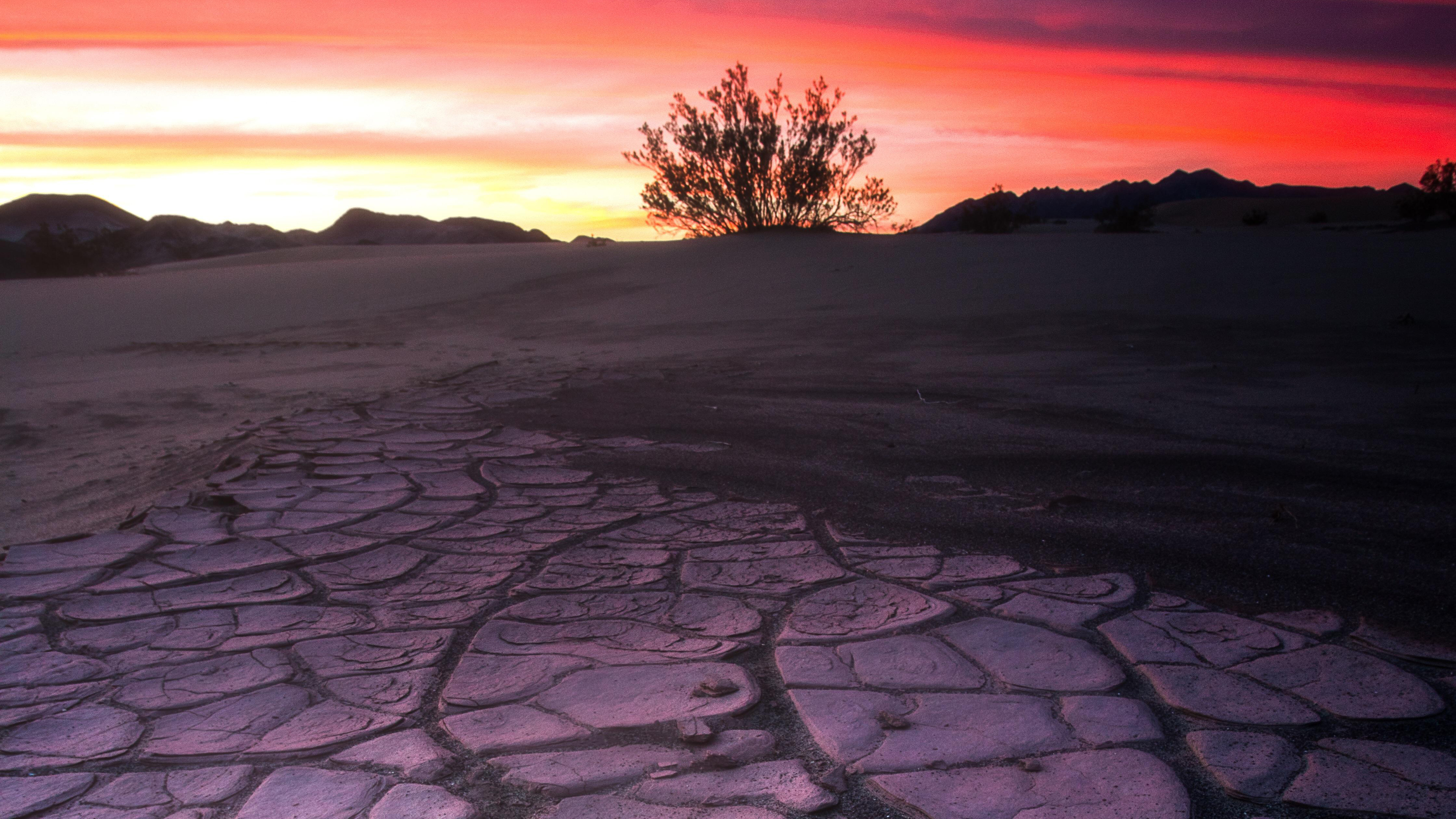 death valley mud crack lone tree 4k 1551644662 - Death Valley Mud Crack Lone Tree 4k - tree wallpapers, nature wallpapers, hd-wallpapers, 4k-wallpapers