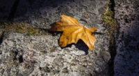 fallen autumn leaf 4k 1551643242 200x110 - Fallen Autumn Leaf 4k - nature wallpapers, leaf wallpapers, hd-wallpapers, autumn wallpapers, 5k wallpapers, 4k-wallpapers