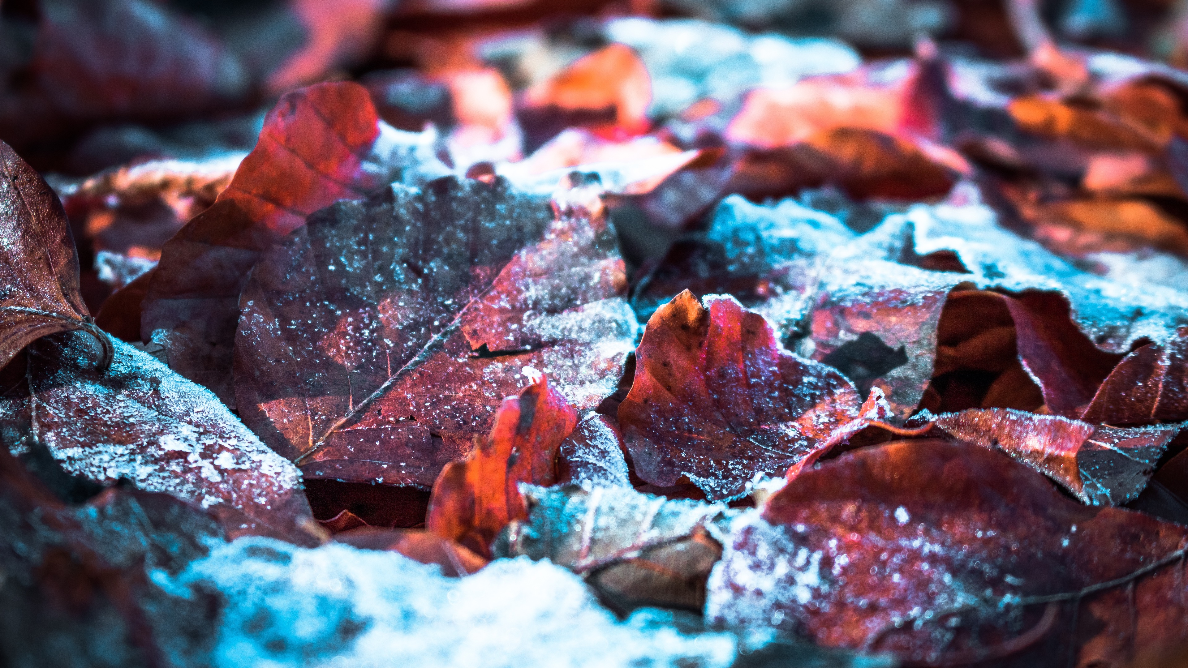 fallen snow on leaf 4k 1551643953 - Fallen Snow On Leaf 4k - snow wallpapers, photography wallpapers, nature wallpapers, leaf wallpapers, hd-wallpapers, 4k-wallpapers