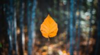 falling autumn leaf 4k 1551643344 200x110 - Falling Autumn Leaf 4k - nature wallpapers, leaf wallpapers, hd-wallpapers, autumn wallpapers, 4k-wallpapers