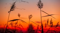 field weeds sunrise 1551643633 200x110 - Field Weeds Sunrise - sunrise wallpapers, nature wallpapers, hd-wallpapers, field wallpapers, 4k-wallpapers