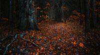forest leaves autumn 4k 1551644659 200x110 - Forest Leaves Autumn 4k - nature wallpapers, leaves wallpapers, hd-wallpapers, forest wallpapers, autumn wallpapers, 4k-wallpapers